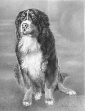 Dog Portrait by Alison Brush